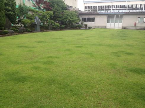 美しい緑の芝生
