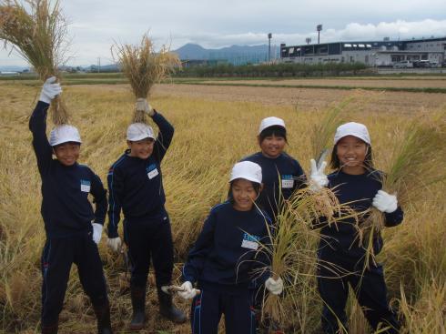 稲刈り5年生